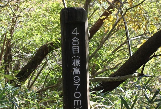仁田峠までの登山道、4合目の写真