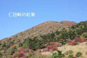 仁田峠の紅葉の写真