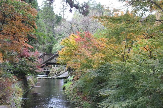 白川水源の紅葉の写真