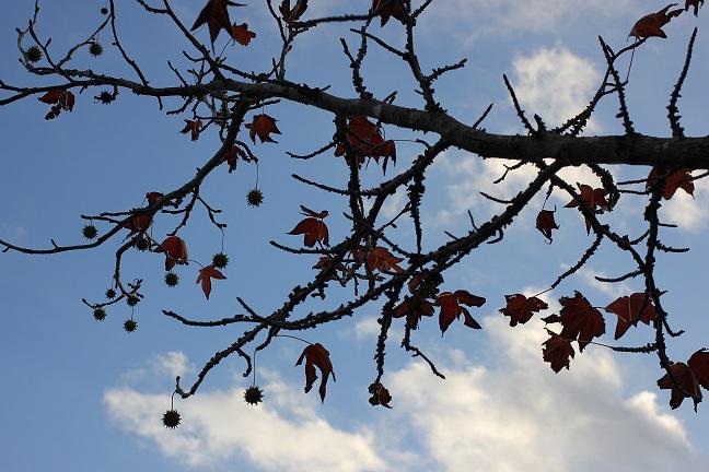 秋の青空と紅葉木の実の写真