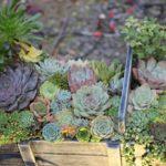 多肉植物の寄せ植えの写真