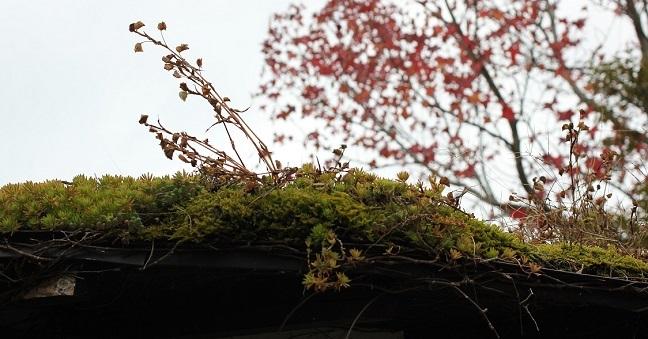 屋根の上の植物の写真