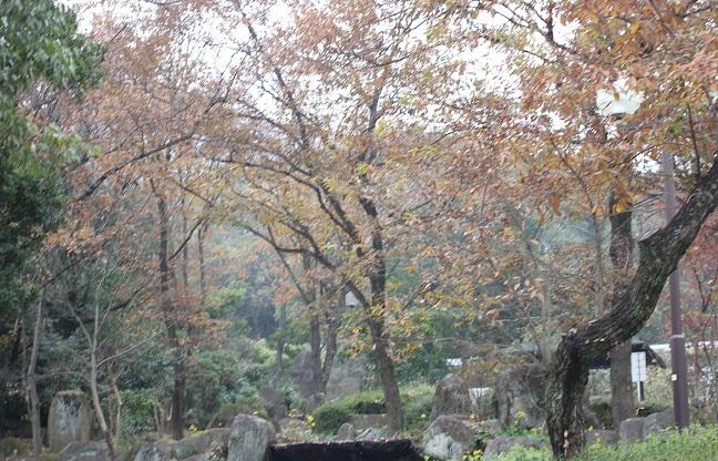 金立ハイウェイ・オアシスの林の風景の写真