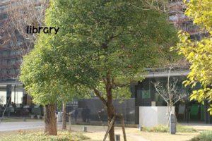 市立図書館の写真