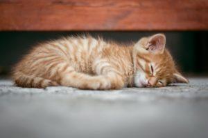 眠ってる猫の写真