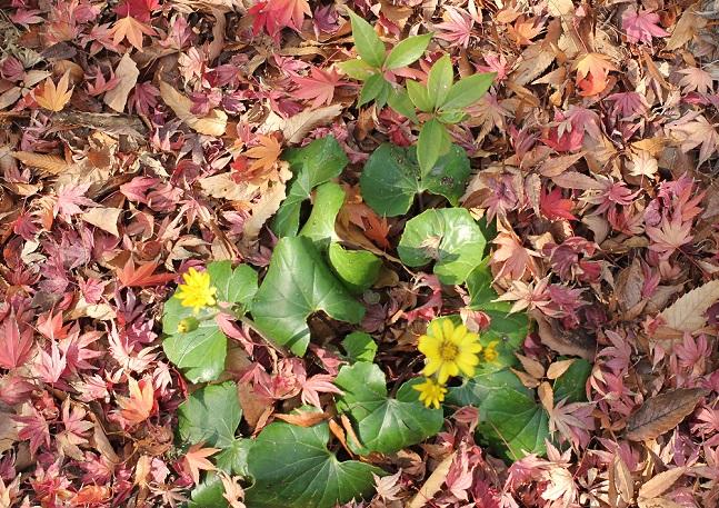 落ち葉と花の写真