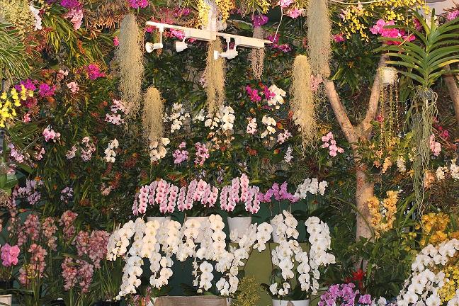 欄の庭の下の部分の写真