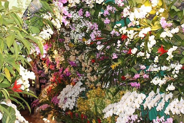 欄の花のトンネルの写真