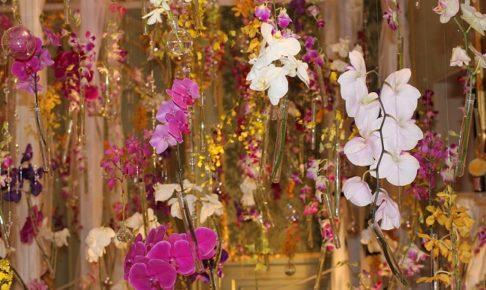 ハウステンボスの欄展のピンクの欄の写真