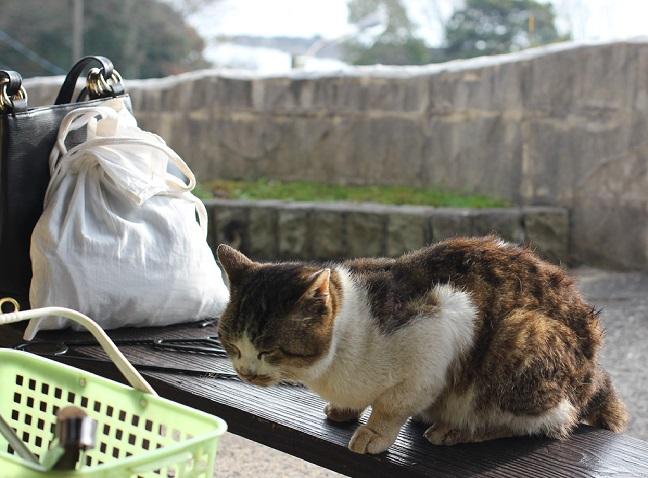 猫がカキ焼きを見てる姿の写真