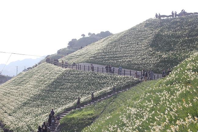 高台から見た水仙の丘の写真