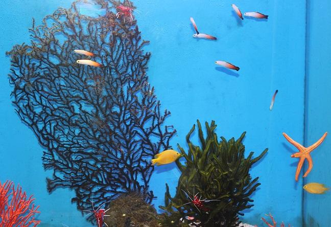 熱帯魚の水槽の写真