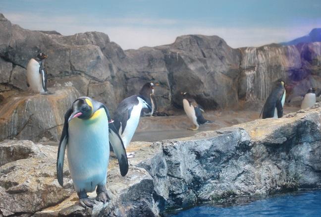 くつろいでるペンギンの写真