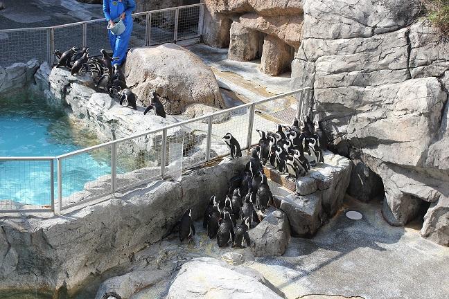 ペンギンのエサやりの写真