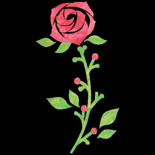 バラのイラスト
