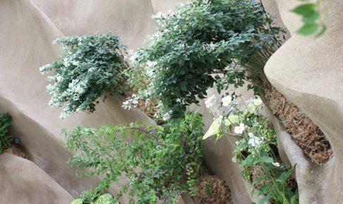 壁から植物が生えてる写真