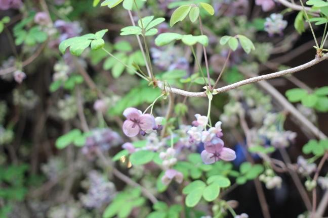 紫色のきれいな花の写真