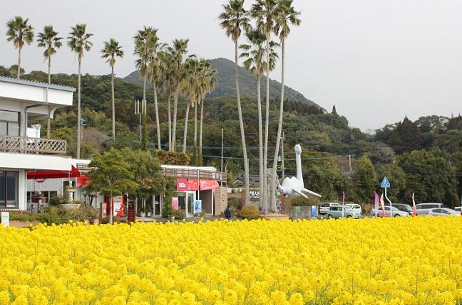 池田湖の菜の花畑の写真