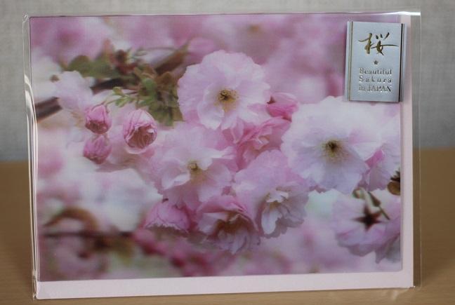 桜のカードの写真