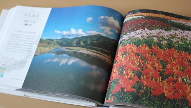 本の紹介 サクラの花の写真