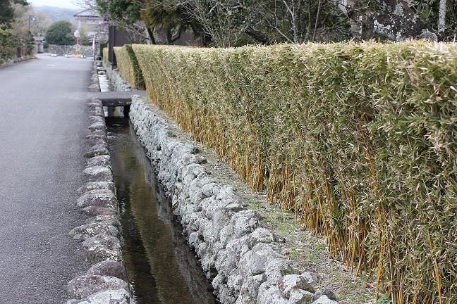 生垣の風景写真
