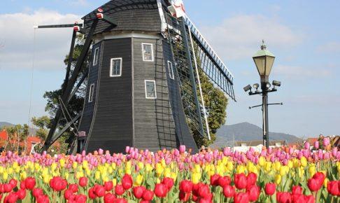 アムステルダム広場のチューリップの写真