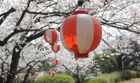 桜とボンボリの写真