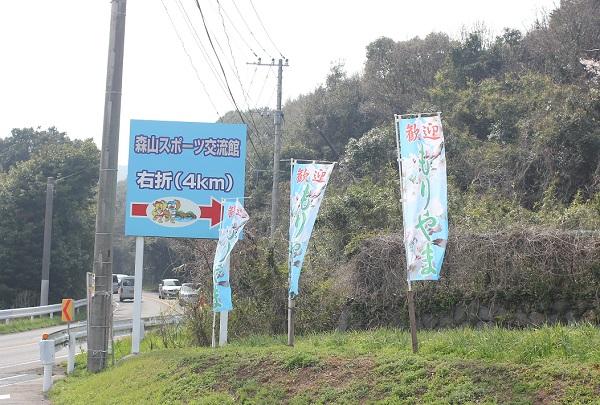 桜のトンネルへの入り口、もりやまの旗の写真