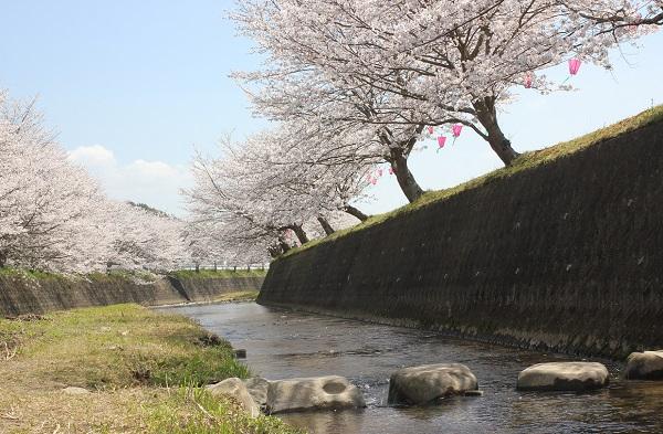 川にあった飛び石の写真