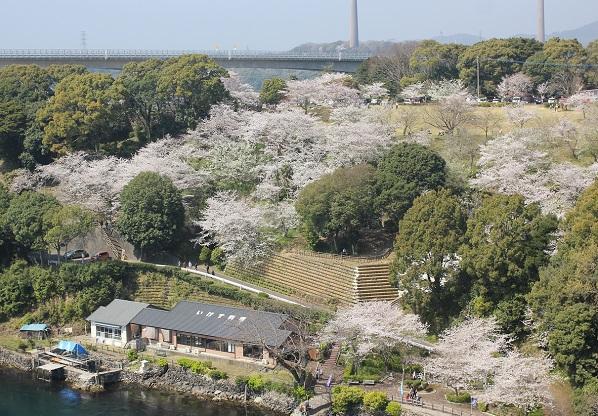 橋から見た桜の写真