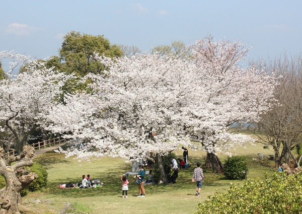 公園の桜と子供達の写真