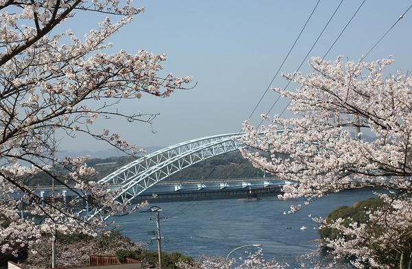 新西海橋と桜の写真