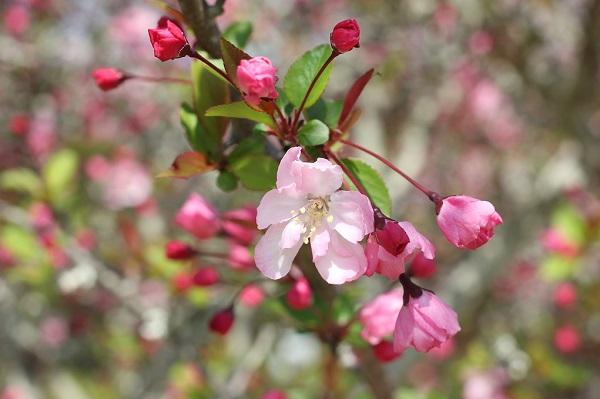 ピンクの可愛いお花の写真