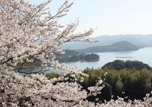 大村湾とソメイヨシノの写真