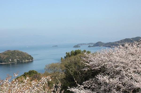 桜と大村湾の写真