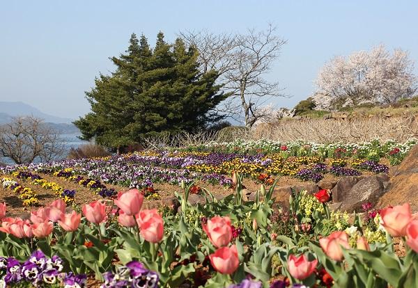 公園の広い花壇の写真