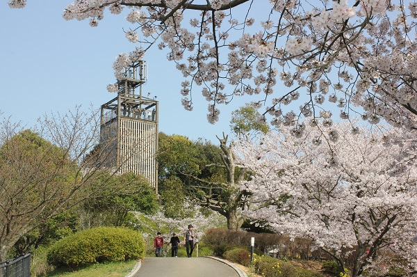 展望台と桜の写真