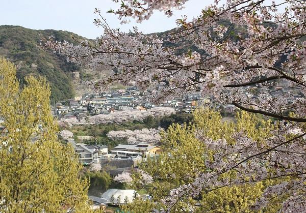 高台からの長与の街並み風景 桜が綺麗な写真