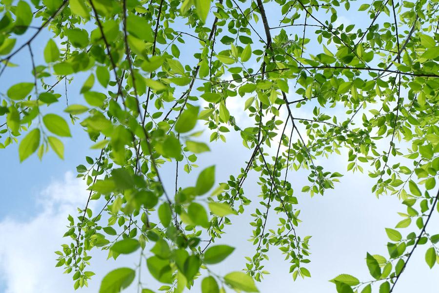 美しい新緑の写真