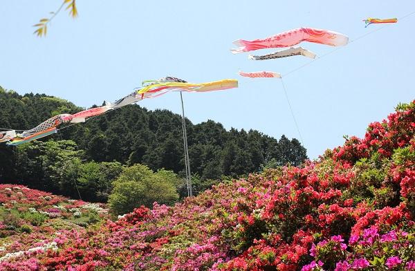 長串山、ツツジと鯉のぼりの写真