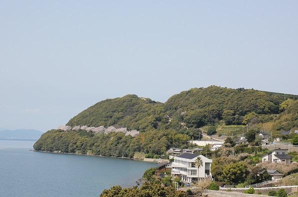 長与、国道207号線から和三郎公園の桜並木が見える風景写真