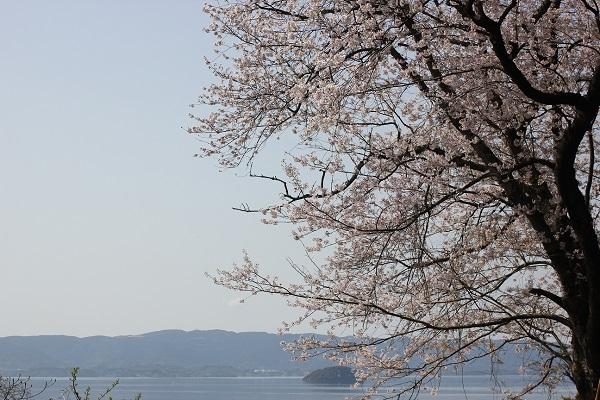 大村湾と桜の写真