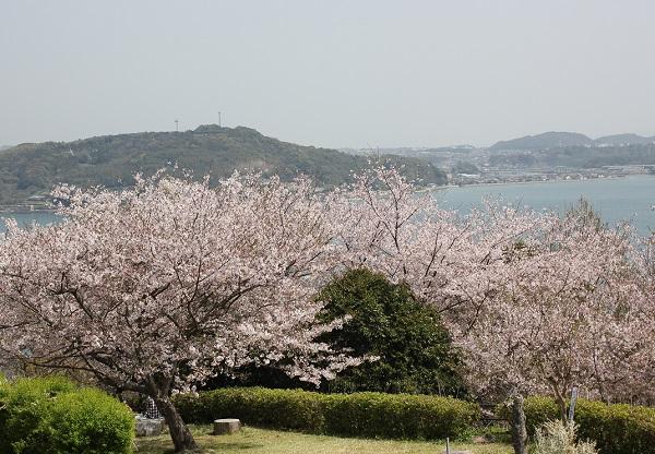 大村湾と桜と公園の様子の写真