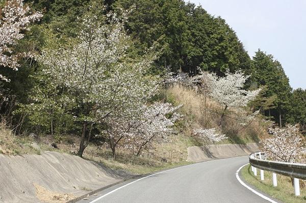 県道204号線の風景写真