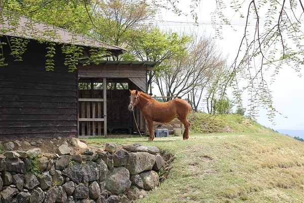 waranayaカフェの馬の写真(さとこ)