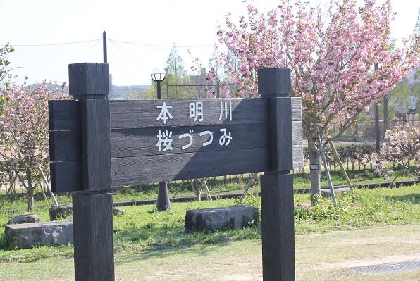 本明川 桜つつみの木の看板写真