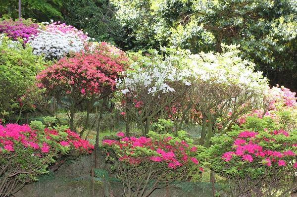 山に咲く色とりどりの写真