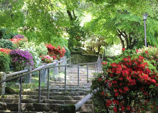 階段わきのツツジと新緑の写真