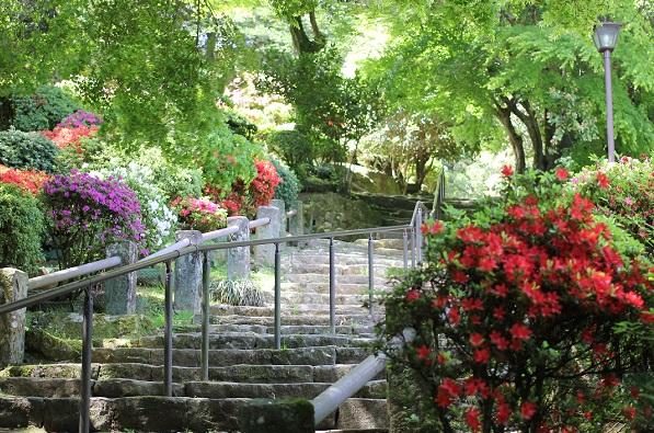 諫早公園の山のツツジの写真