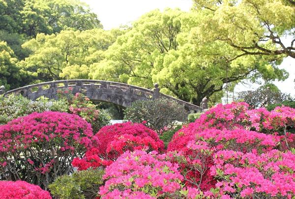 諫早諫早公園の眼鏡橋とつつじの写真